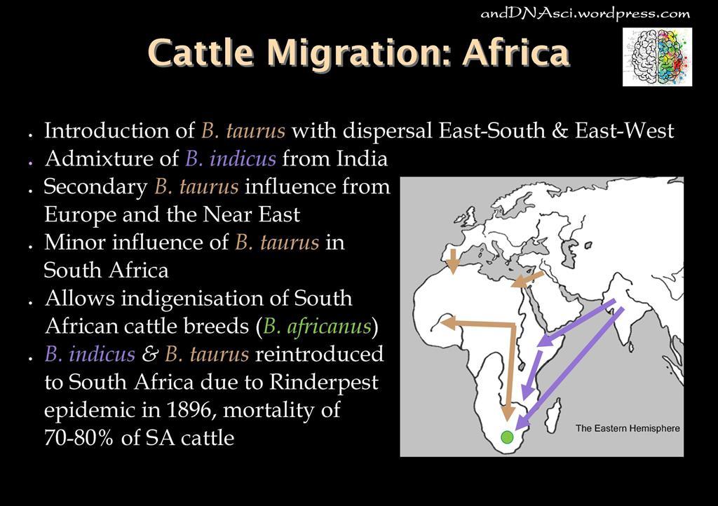 Cattle Migration Africa andDNAsci.wordpress
