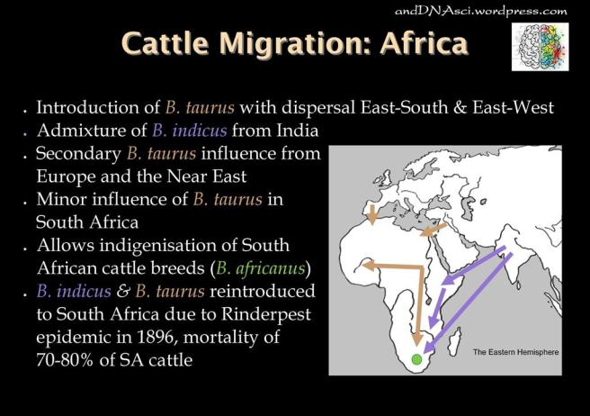 Cattle Migration Africa andDNAsci.wordpress