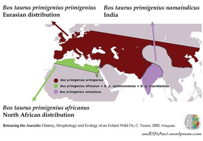 Historical distribution Auroch andDNAsci.wordpress.com Tanzelle Oberholster
