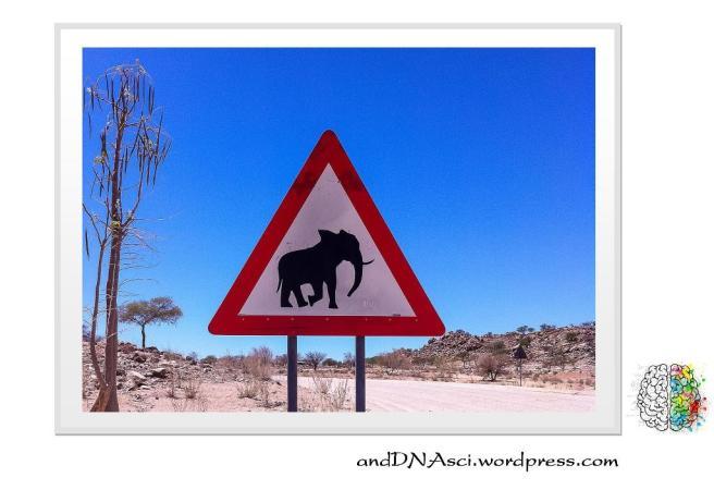 Caution Elephant Ahead Namibia Tanzelle Oberholster andDNAsci.wordpress