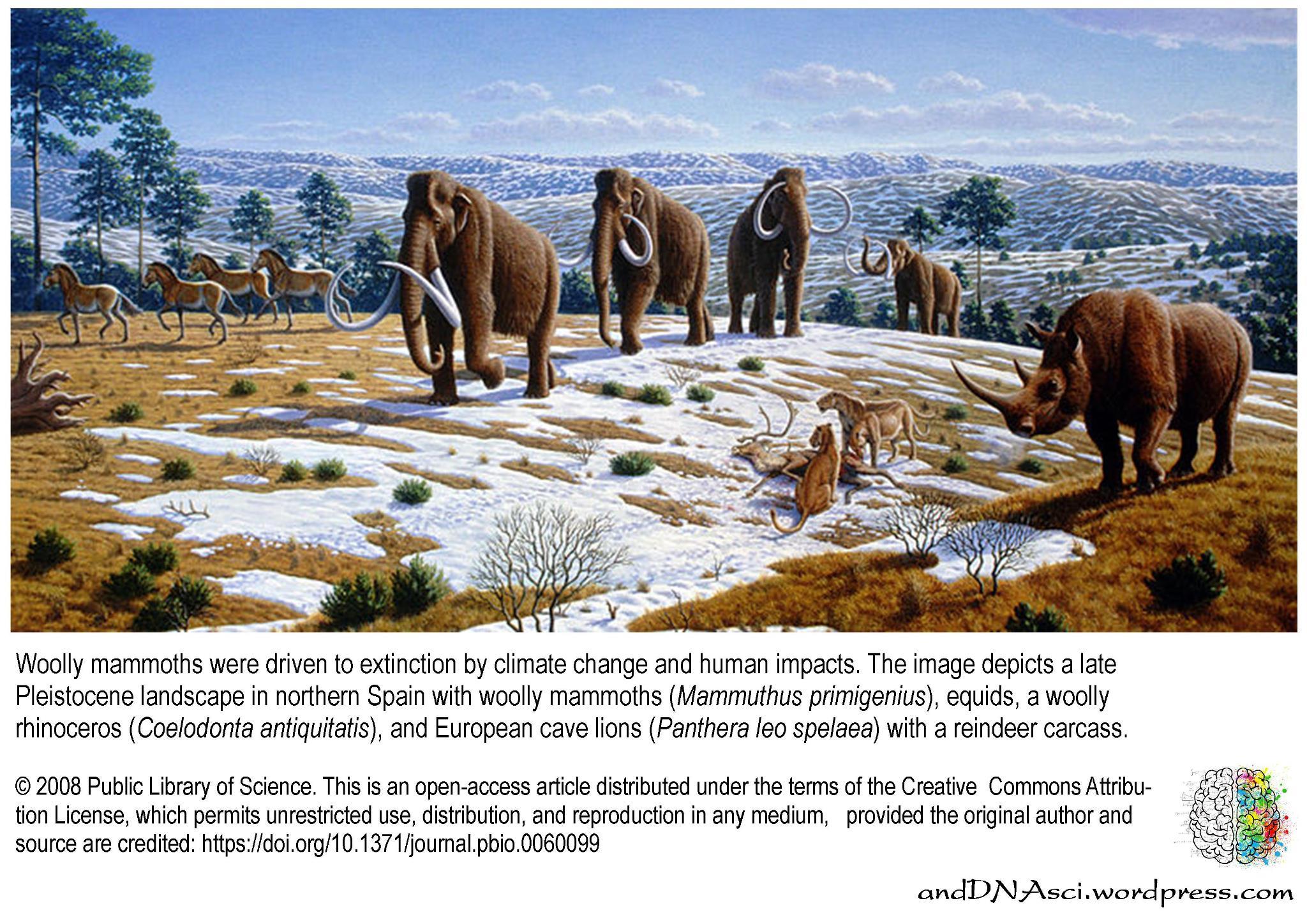 Pleistocene landscape fauna, woolly, mammoth, rhinoceros, european cave lions, spain, Caitlin Sedwick, Alan Turner