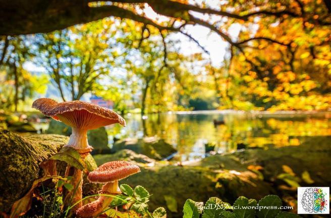 mushrooms woodland fairytale autumn Tanzelle Oberholster Begryp Afrikaans Poem anddnasci.wrodpress.com