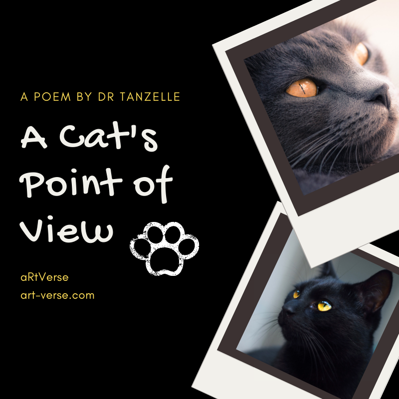 A Cat's Point of View, artverse, art-verse.com, drabble, prose, literature, writing, inspirational, message, tanzelle oberholster, cats