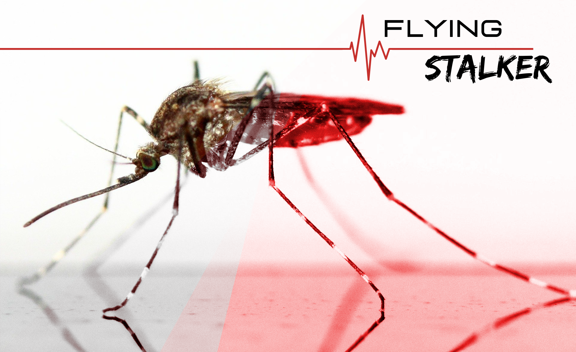 Flying Stalker, Drabble, Humour, MindFrameShift, Tanzelle Oberholster, Mosquito, Duotone, Graphic Design, Typography