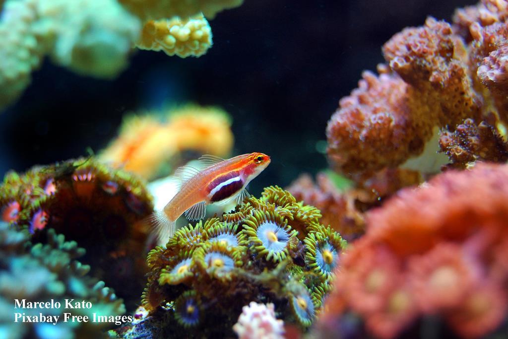 fish, coral, reef, ocean, underwater, tank