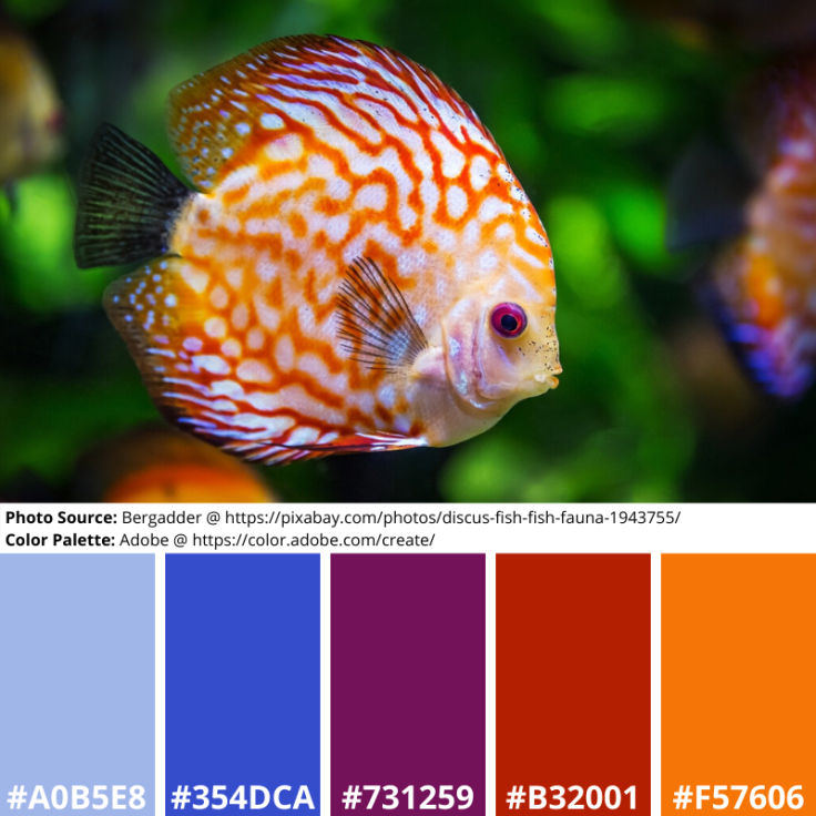 Discus Fish, Mood Board, Blue, Red, Orange