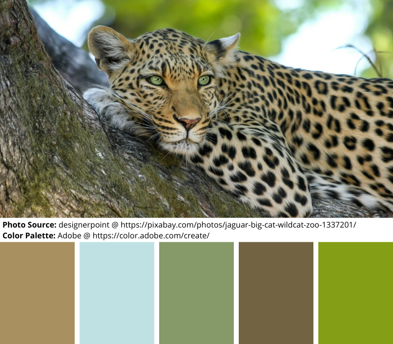 Leopard in a Tree, Mood Board, Color Palette, blue, green, brown, neutrals