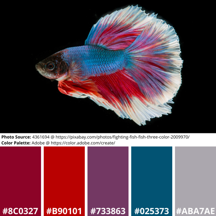 Siamese Fighting Fish, Mood Board, Red, Blue, White