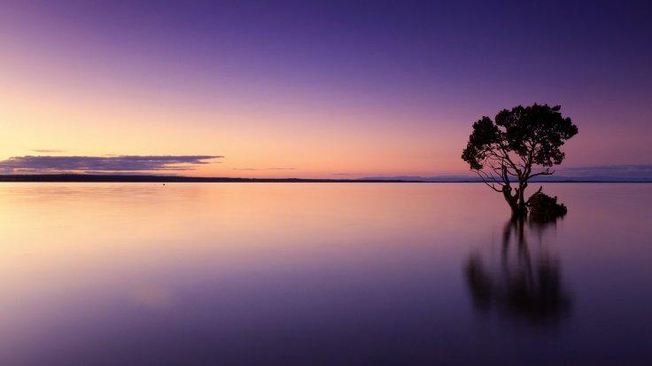 Purple, Sunset, Tree, Water, Silhouette
