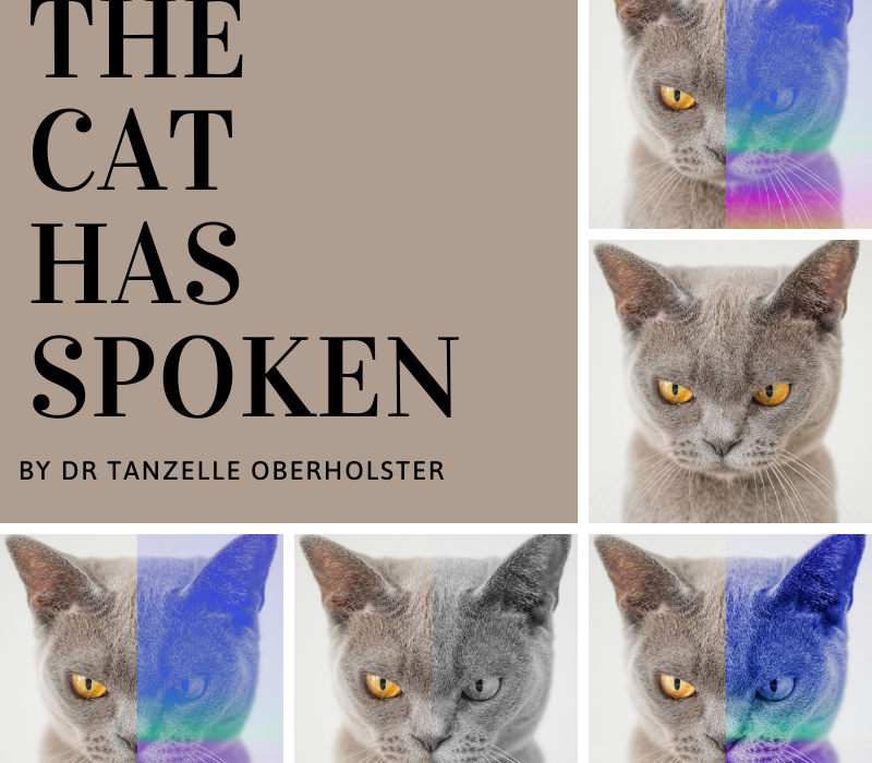 The Cat Has Spoken, Tanzelle Oberholster, Mind Frame Shift, drabble, story, cat, grumpy, not impressed, graphic design, photo, grid, magazine style