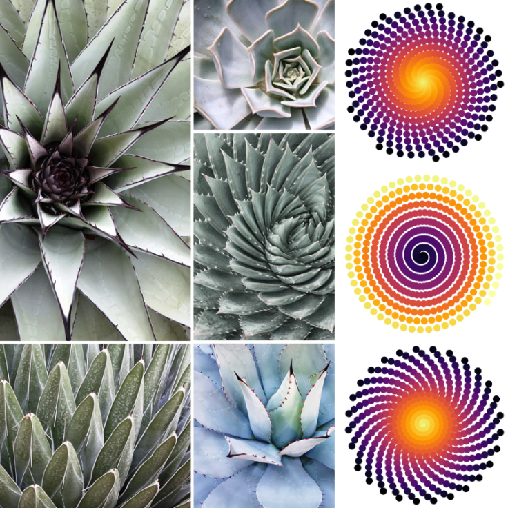 Phylotaxis, White, Cacti, Data Art, Code Art, Math Art, aRtVerse, Teepublic, https://www.teepublic.com/user/artverse , Geometry, Symmetry, Spiral