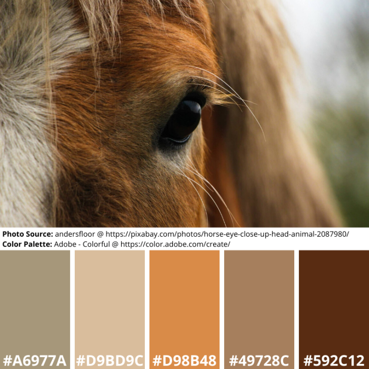 Close-up Horse Mood Board color palette